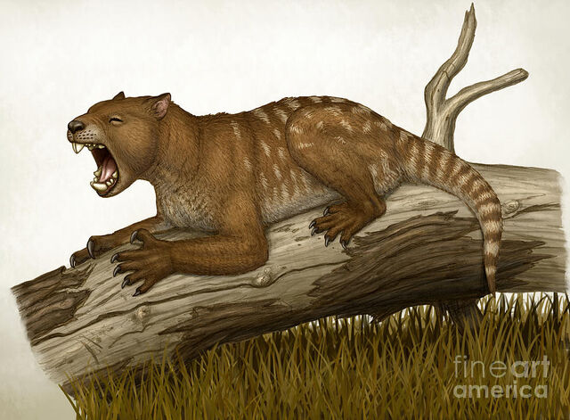 File:Thylacoleo-carnifex-a-marsupial-heraldo-mussolini.jpg