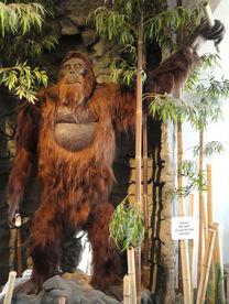 Gigantopithecus-blacki
