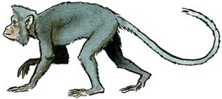 File:Mesopithecus..jpg