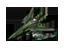 File:P-Cruiser-LV1.png