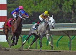 File:HorseRacingpic.jpg