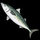 File:Mackerel (ToV).png