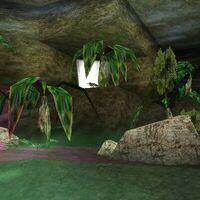 Jungle Shadows Drop Live