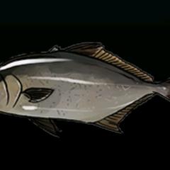 琥珀鱼 - 稀有度:普通,尺寸:中