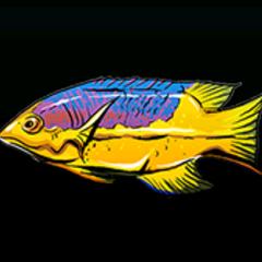 红普提鱼 - 稀有度:普通,尺寸:小