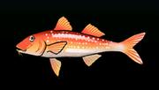 SpottedGoatfishACP