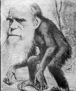 XIX Darwin Caricature
