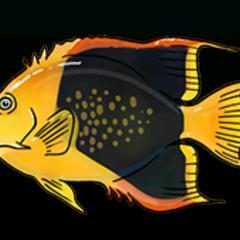 三色刺蝶鱼 - 稀有度:普通,尺寸:中