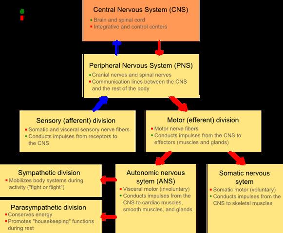 File:NSsystem.png
