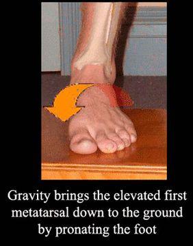 Rothbarts Foot in GDPron