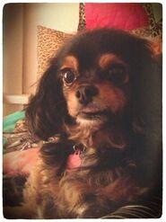 Pixie (14)