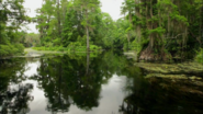 Everglades & Ally-Gators (182)