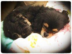 Sleeping Pixie (2)