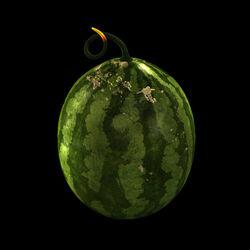 M67 Watermelon