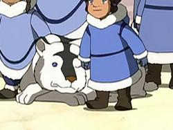 Polar dog