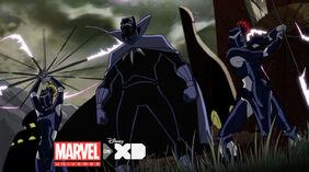 Black panther-