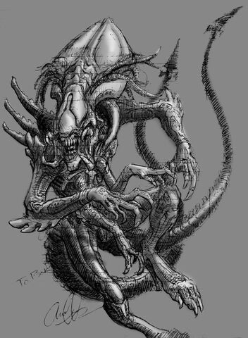 File:Queen Predalien Sketch by Art Minion Andrew0.jpg