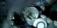Unidentified worm (LV-223)