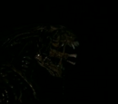 Warrior (Aliens versus Predator)