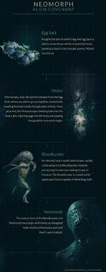 Neomorph Life Cycle