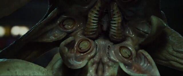 File:Trilobite2.jpg