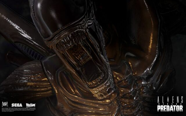 File:Normal avp queen 1920x1200.jpg