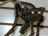 NECA Dog Alien at TF14