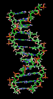 File:170px-DNA orbit animated static thumb.png