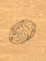 Brain item artwork BG2.png