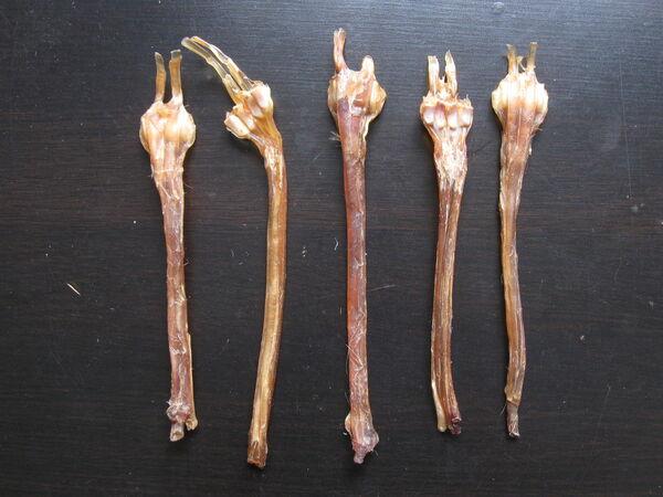 Red deer leg tendons
