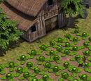 Пример: Новые растения