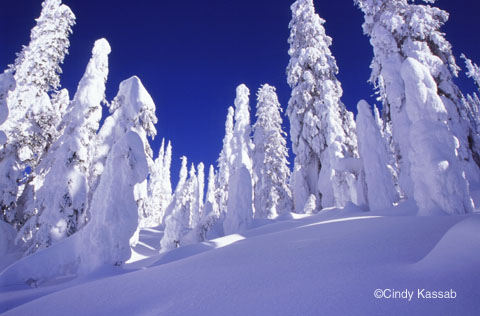 File:Winter03.jpg