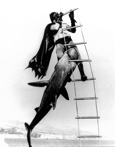 File:SharkPhotos.jpg