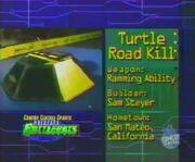 Turtle road kill stats 1.0