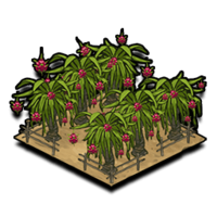 Orchard dragonfruit icon