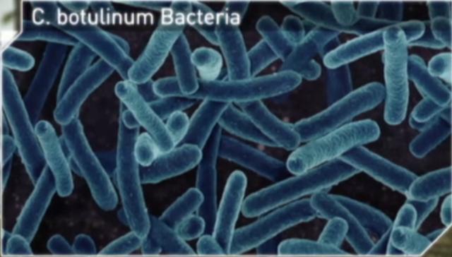 File:Bot bacteria.png