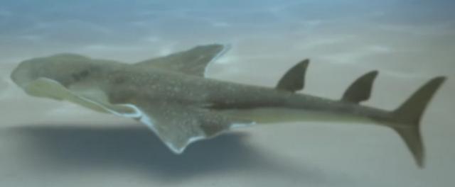 File:Angel shark prehistoric.png