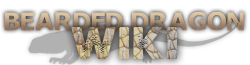 Bearded Dragons Wiki