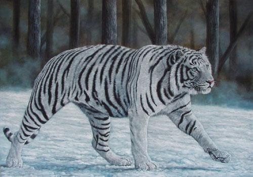 File:White tiger1.jpg