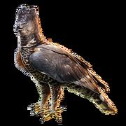 Huge item crownedeagle 01