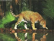 Jaguars-wildlife-299736-800x600