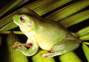 Frog-Small-Images-Template