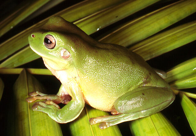 File:Frog-Small-Images-Template.jpg