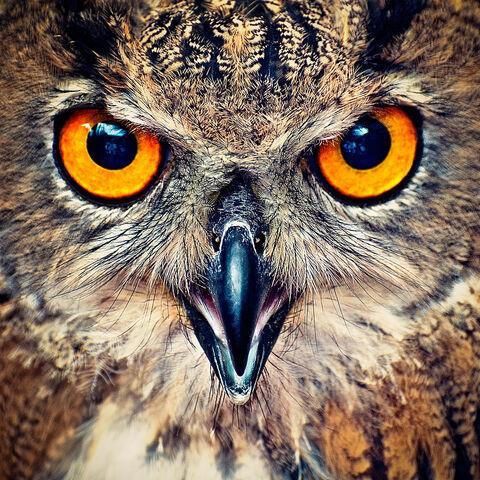 File:OwlFlight - Rousel(2).jpg