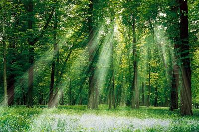 Enchanted-woods