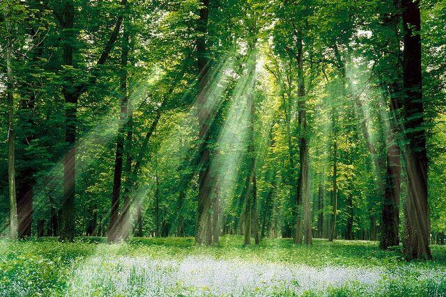 File:Enchanted-woods.jpg