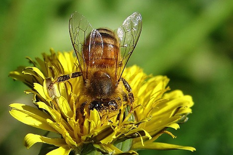 File:Wikia-Visualization-Main,beekeeping.png