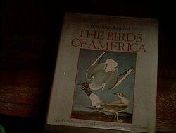 TheBirdsofAmerica