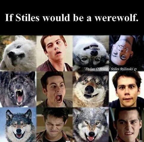 File:Stiles-wolf.jpg