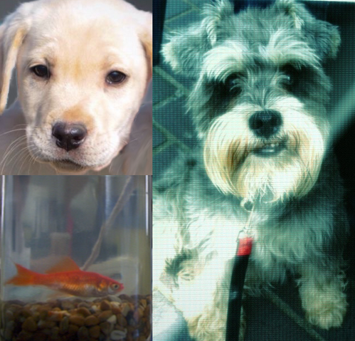 File:AnimalsBBC.png